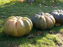 Pompoen het oogsten De pompoenen van Halloween De herfst landelijke rustieke achtergrond met pompoen Royalty-vrije Stock Foto's