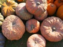 Pompoen het oogsten De pompoenen van Halloween De herfst landelijke rustieke achtergrond met pompoen Royalty-vrije Stock Afbeeldingen