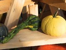 Pompoen het oogsten De pompoenen van Halloween De herfst landelijke rustieke achtergrond met pompoen Stock Afbeelding