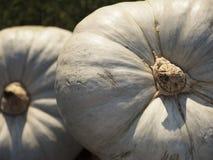 Pompoen het oogsten De pompoenen van Halloween De herfst landelijke rustieke achtergrond met pompoen Stock Foto's