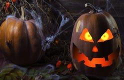 Pompoen in het Web en spinnen op de achtergrond van de boom voor Halloween 4 royalty-vrije stock foto