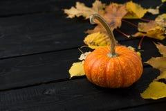 Pompoen met de herfstbladeren Stock Foto's