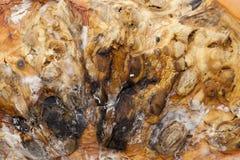 Pompoen met vorm wordt behandeld die stock foto's