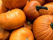 POMPOEN, Sinaasappel, Dalingsoogst, Dankzegging, Middelgrote grootte stock foto's