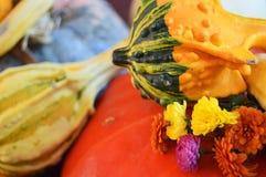Pompoen van de close-up de kleurrijke herfst, pompoenen, bloemendecoratie Royalty-vrije Stock Afbeelding
