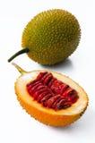 Pompoen van Jackfruit van de baby de Doornige Bittere Royalty-vrije Stock Foto