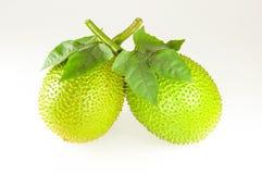 Pompoen van Jackfruit van de baby de Doornige Bittere Stock Fotografie