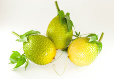 Pompoen van Jackfruit van de baby de Doornige Bittere Royalty-vrije Stock Afbeelding