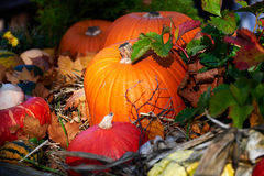 Pompoen voor Halloween Stock Fotografie