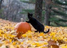 Pompoen, zwarte kat en dalingsbladeren in het hout Royalty-vrije Stock Fotografie