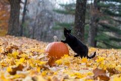 Pompoen, zwarte kat en dalingsbladeren in het hout Royalty-vrije Stock Afbeeldingen