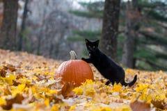 Pompoen, zwarte kat en dalingsbladeren in het hout Royalty-vrije Stock Afbeelding