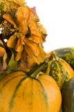 Pompoenen Royalty-vrije Stock Afbeeldingen
