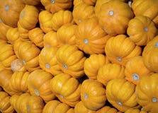 Pompoenen Royalty-vrije Stock Afbeelding