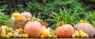 Pompoenen als decoratie voor de herfst en Halloween royalty-vrije stock afbeeldingen
