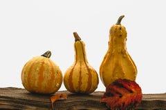 Pompoenen, appelen en de herfstbladeren royalty-vrije stock afbeeldingen