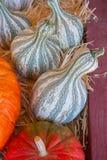 Pompoenen in de herfst Stock Afbeeldingen