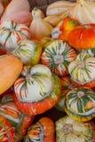 Pompoenen in de herfst Royalty-vrije Stock Foto's