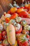 Pompoenen in de herfst Stock Foto's