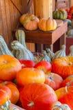 Pompoenen in de herfst Royalty-vrije Stock Afbeelding
