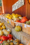 Pompoenen in de herfst Royalty-vrije Stock Foto