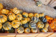 Pompoenen in de herfst Stock Foto