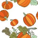 Pompoenen in de herfstkleuren Stock Afbeelding