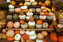 Pompoenen in een markt Stock Fotografie