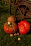 Pompoenen en appelen in de tuin Royalty-vrije Stock Afbeelding