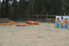 Pompoenen en de decoratie van de landbouwbedrijfactiviteit voor jonge geitjes Stock Afbeelding