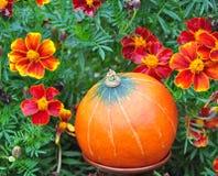 Pompoenen en de herfst Royalty-vrije Stock Foto's