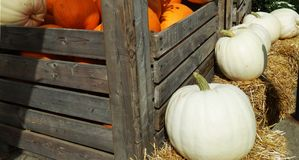 Pompoenen en Hay Outdoors in de Herfst Royalty-vrije Stock Afbeeldingen