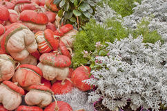 Pompoenen en rozemarijn Royalty-vrije Stock Foto's