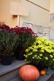 Pompoenen en Veel Chrysantenbloemen stock foto's