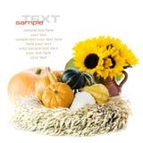 Pompoenen en zonnebloemen Royalty-vrije Stock Afbeelding