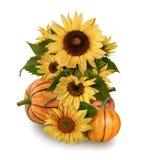 Pompoenen en zonnebloemen op een witte achtergrond Stock Foto