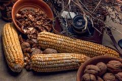 Pompoenen, graan, noten en Amerikaanse veenbessen op stof royalty-vrije stock foto