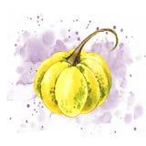 Pompoenen Hand het getrokken waterverf schilderen op witte achtergrond met plons Autumn Vegetables stock illustratie