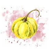Pompoenen Hand het getrokken waterverf schilderen op witte achtergrond met plons Autumn Vegetables royalty-vrije stock foto
