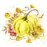 Pompoenen Hand het getrokken waterverf schilderen op witte achtergrond met plons Autumn Vegetables royalty-vrije illustratie