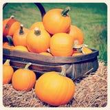 Pompoenen instagram Royalty-vrije Stock Foto