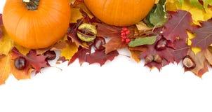 Pompoenen met de herfstbladeren voor thanksgiving day op witte mening F Royalty-vrije Stock Afbeelding