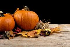 Pompoenen met de herfstbladeren voor thanksgiving day op zwarte achtergrond Royalty-vrije Stock Foto's