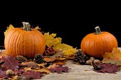 Pompoenen met de herfstbladeren voor thanksgiving day op zwarte backgr Royalty-vrije Stock Afbeelding