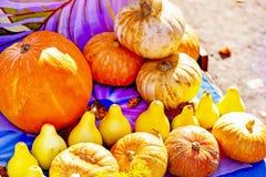 Pompoenen van verschillende grootte, verkopende pompoenen op de markt royalty-vrije stock foto's