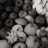 Pompoenen voor verkoop - B/W-vierkant Royalty-vrije Stock Foto's