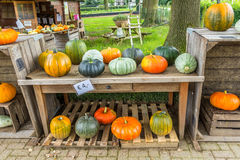 Pompoenen voor verkoop in boerenerf Royalty-vrije Stock Afbeeldingen