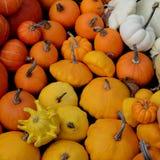 Pompoenen voor verkoop - Kleurenvierkant Royalty-vrije Stock Afbeeldingen