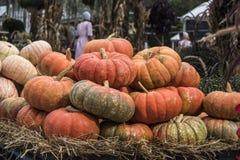 Pompoenenmarkt voor Thanksgiving day royalty-vrije stock afbeelding