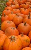 Pompoenflard in de herfst Stock Afbeelding